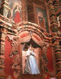 Coronilla Guadalupena